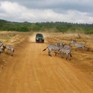 Explore Nairobi