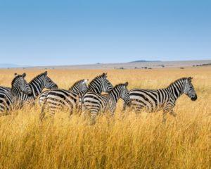 MedTreks Kenya Safari