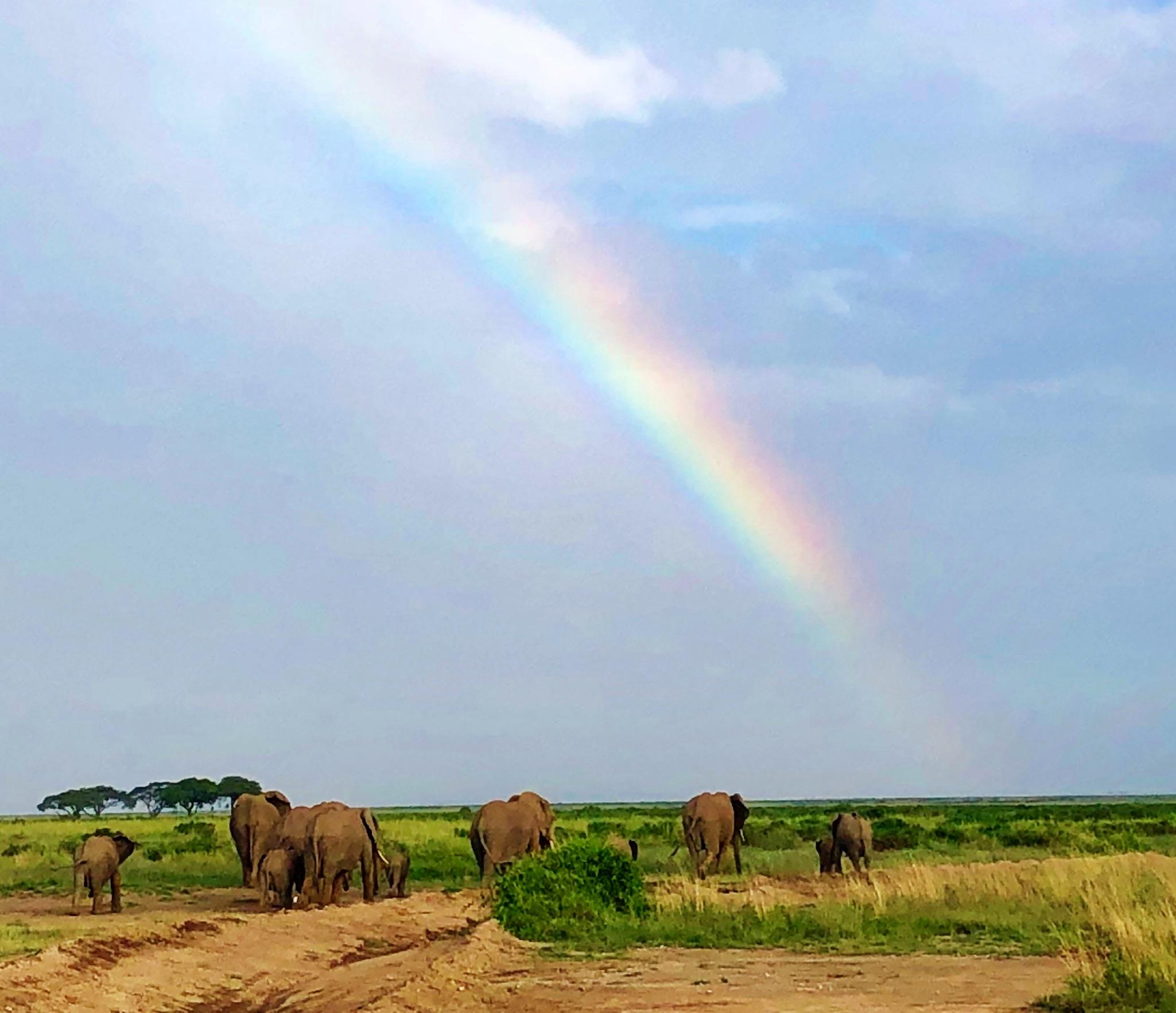 MedTreks Safari